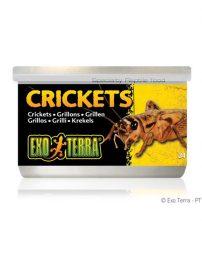 a-crickets-500x650