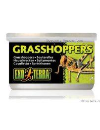a-hopper-500x650