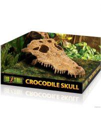 croc-skull-500x650