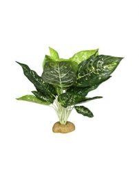 evergreen1-500x650