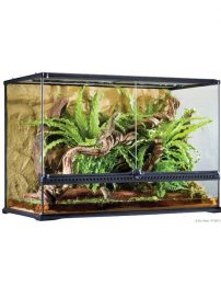 large-tall-terrarium-500x650