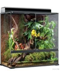 large-x-tall-terrarium-500x650