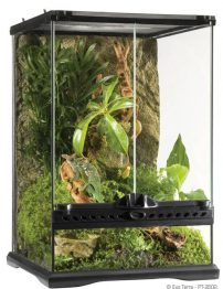 mini-tall-terrarium-500x650