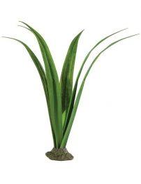 pandanus-smart-plant