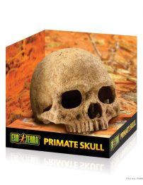 primate-skull-500x650