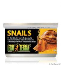 snails-500x650